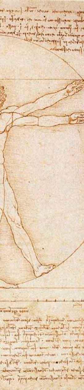 side-vitruvian